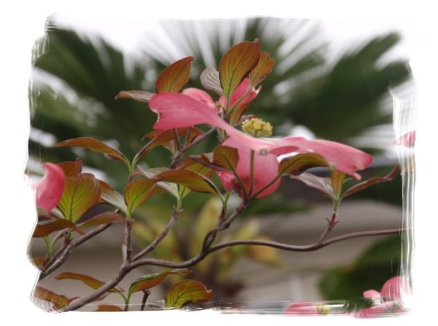 庭木の花々_c0026824_16265557.jpg