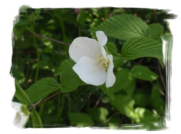 庭木の花々_c0026824_1627503.jpg