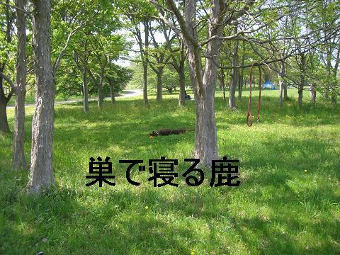 f0129731_20534264.jpg