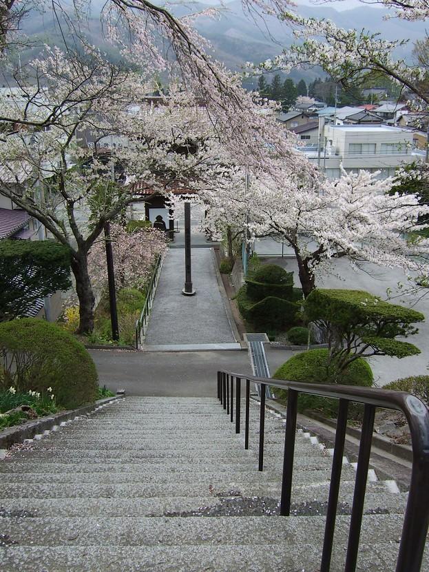新町界隈は満開か・・・・・・・_d0001843_21302971.jpg