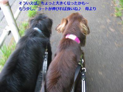 b0148945_18194036.jpg