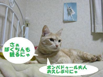 b0151748_1337324.jpg