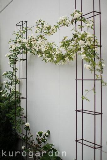 白花のアプローチ_e0119151_18221032.jpg