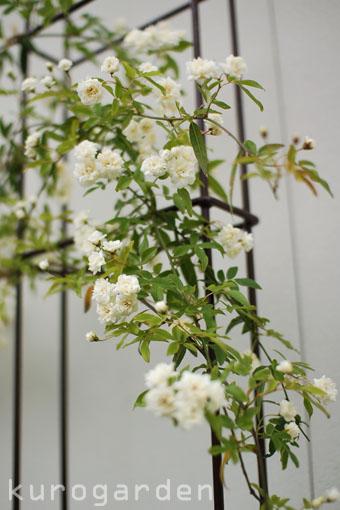 白花のアプローチ_e0119151_18232088.jpg