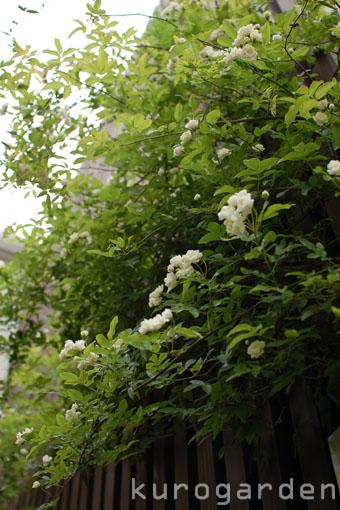 白花のアプローチ_e0119151_1823831.jpg