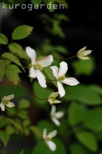 白花のアプローチ_e0119151_18242016.jpg