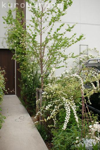 白花のアプローチ_e0119151_18252437.jpg