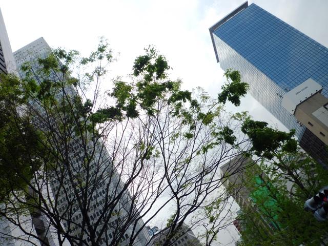 街路樹…新期が始まりました…_b0093660_13195841.jpg