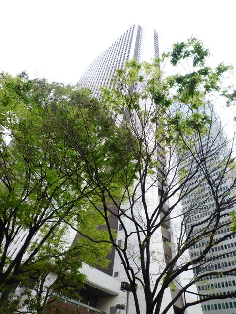 街路樹…新期が始まりました…_b0093660_132016100.jpg