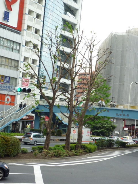 街路樹…新期が始まりました…_b0093660_1323932.jpg