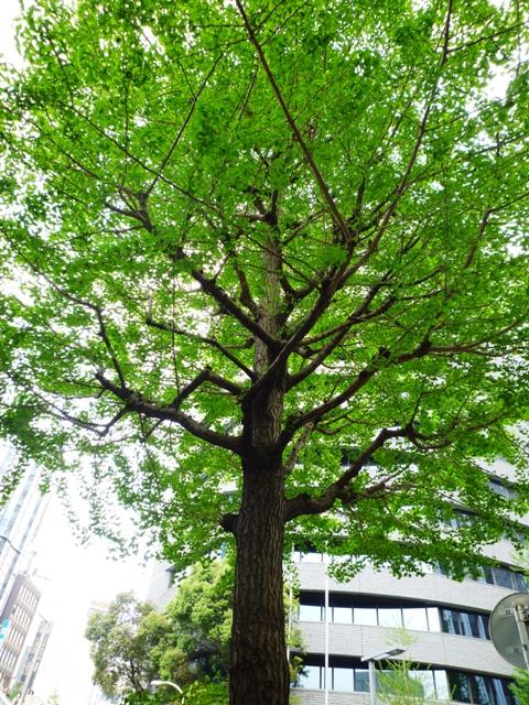 街路樹…新期が始まりました…_b0093660_13241553.jpg