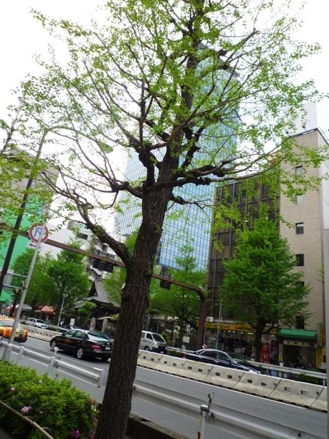 街路樹…新期が始まりました…_b0093660_1324571.jpg