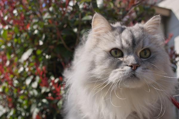 動物写真 猫_c0168669_14344316.jpg
