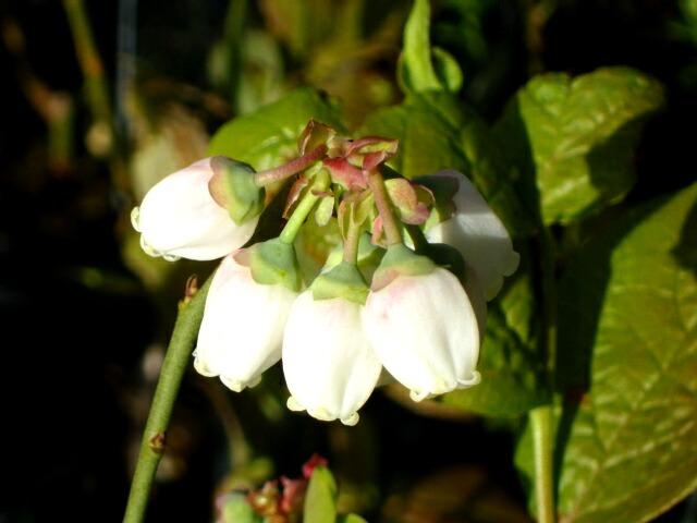 白い花と緑の花_f0018078_16515654.jpg