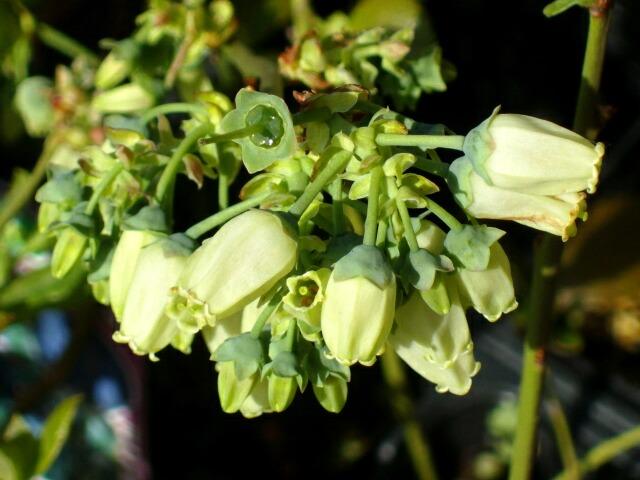 白い花と緑の花_f0018078_1652575.jpg