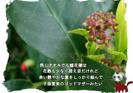 f0137096_2210891.jpg