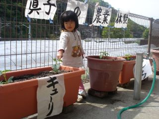 マコの農業体験!!&両親のお野菜販売!!_e0166301_14323768.jpg