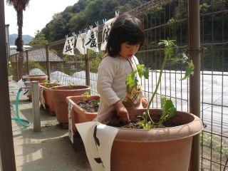 マコの農業体験!!&両親のお野菜販売!!_e0166301_14365173.jpg