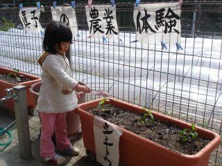 マコの農業体験!!&両親のお野菜販売!!_e0166301_14404966.jpg