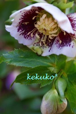 f0170524_15531883.jpg