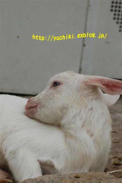 b0153451_22224481.jpg