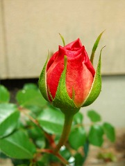 春の庭実況中継_f0207652_13312170.jpg