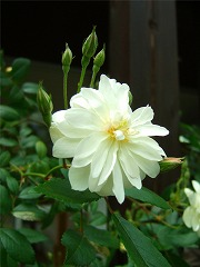 春の庭実況中継_f0207652_13325480.jpg