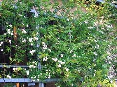春の庭実況中継_f0207652_13383398.jpg