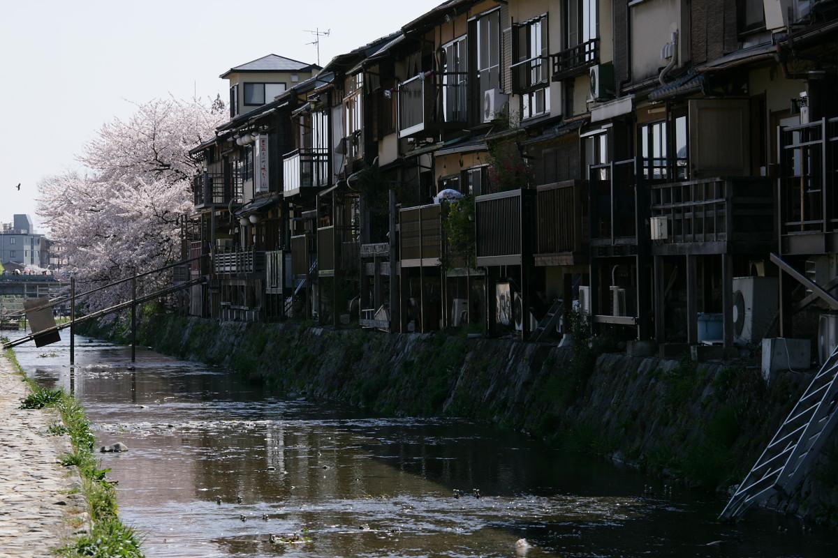 木屋町 高瀬川 桜ひらひら_f0021869_22572477.jpg