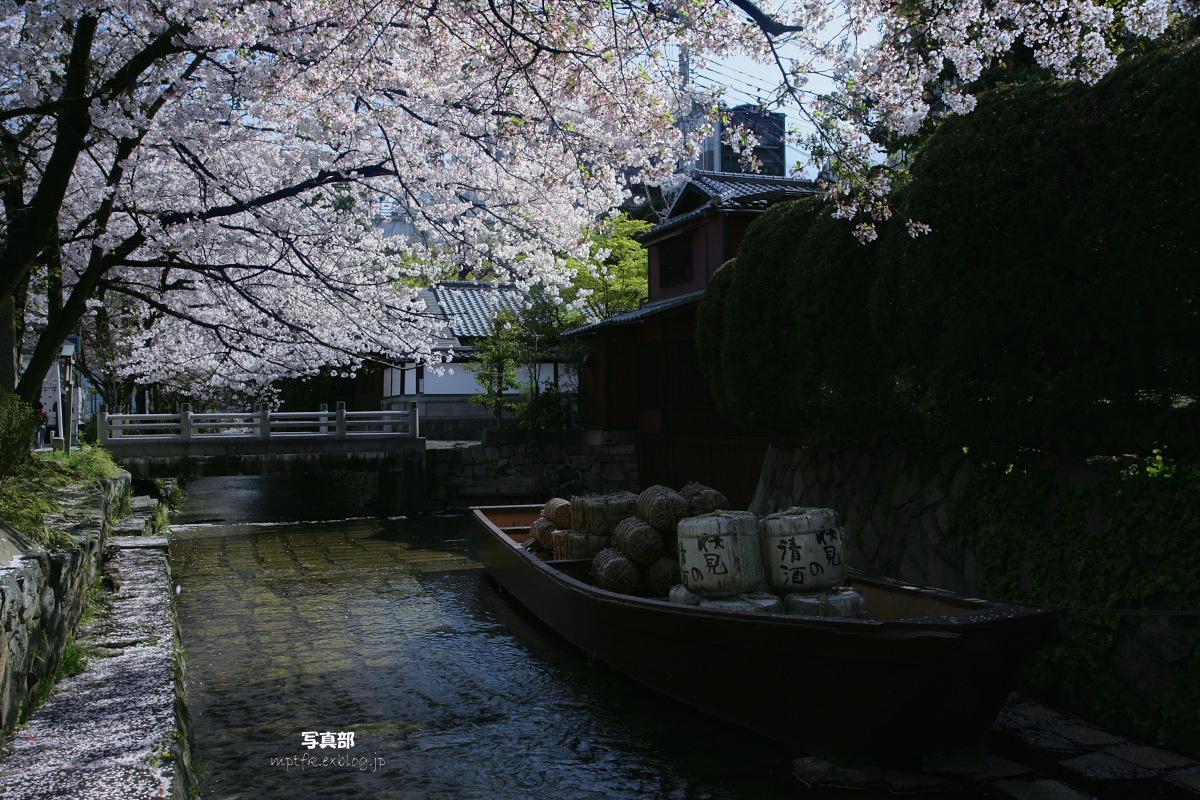 木屋町 高瀬川 桜ひらひら_f0021869_232371.jpg