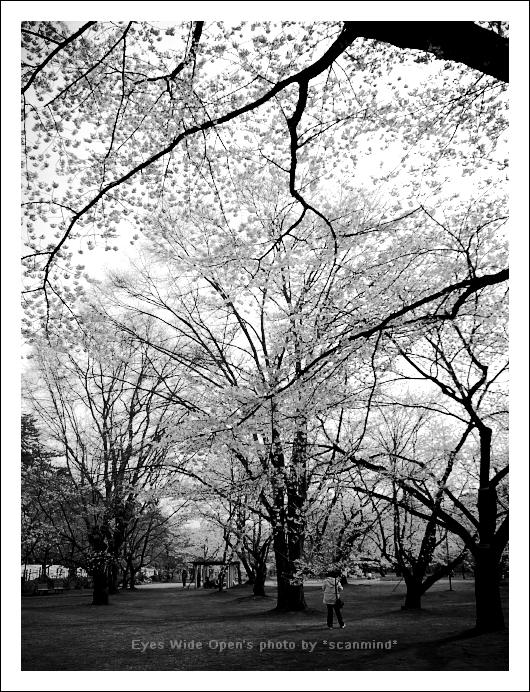 white spring_c0170584_23485366.jpg