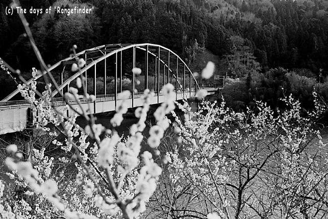 月ヶ瀬渓谷の梅 3_f0139991_22503312.jpg