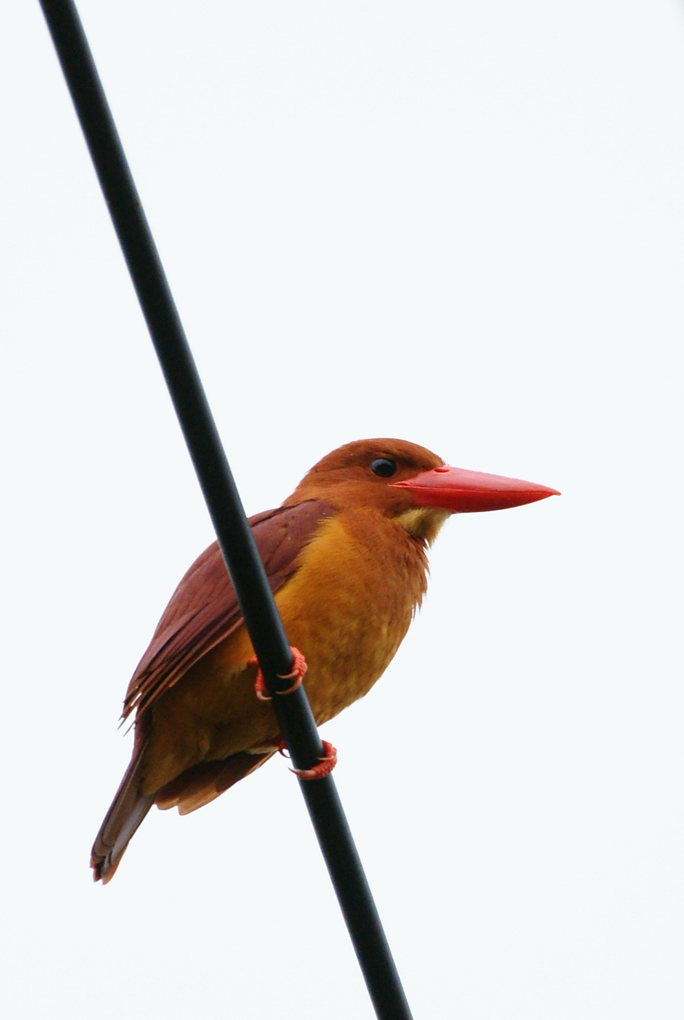 八重山 野鳥たち_c0124795_975844.jpg