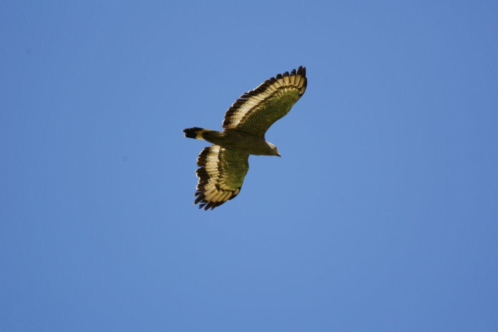 八重山 野鳥たち_c0124795_984580.jpg