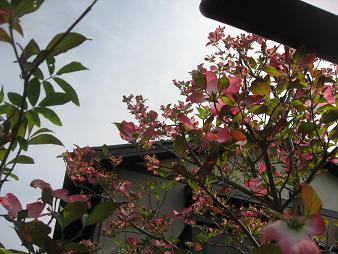 花とらむねとプリンケーキ。_f0126705_0165735.jpg