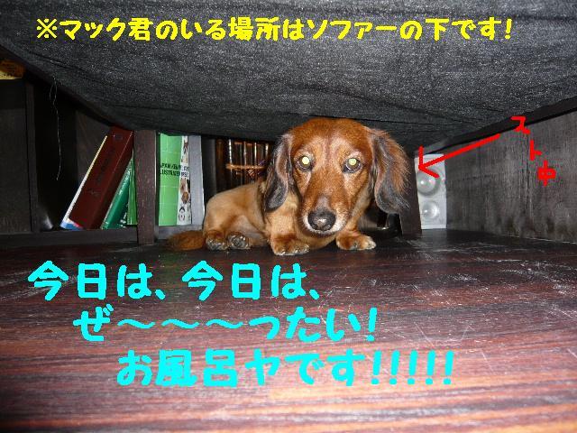 b0130018_11482628.jpg