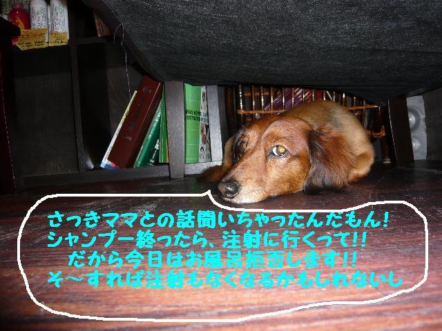 b0130018_1149460.jpg