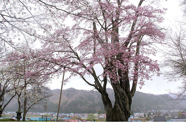 花だより_d0012134_10475338.jpg