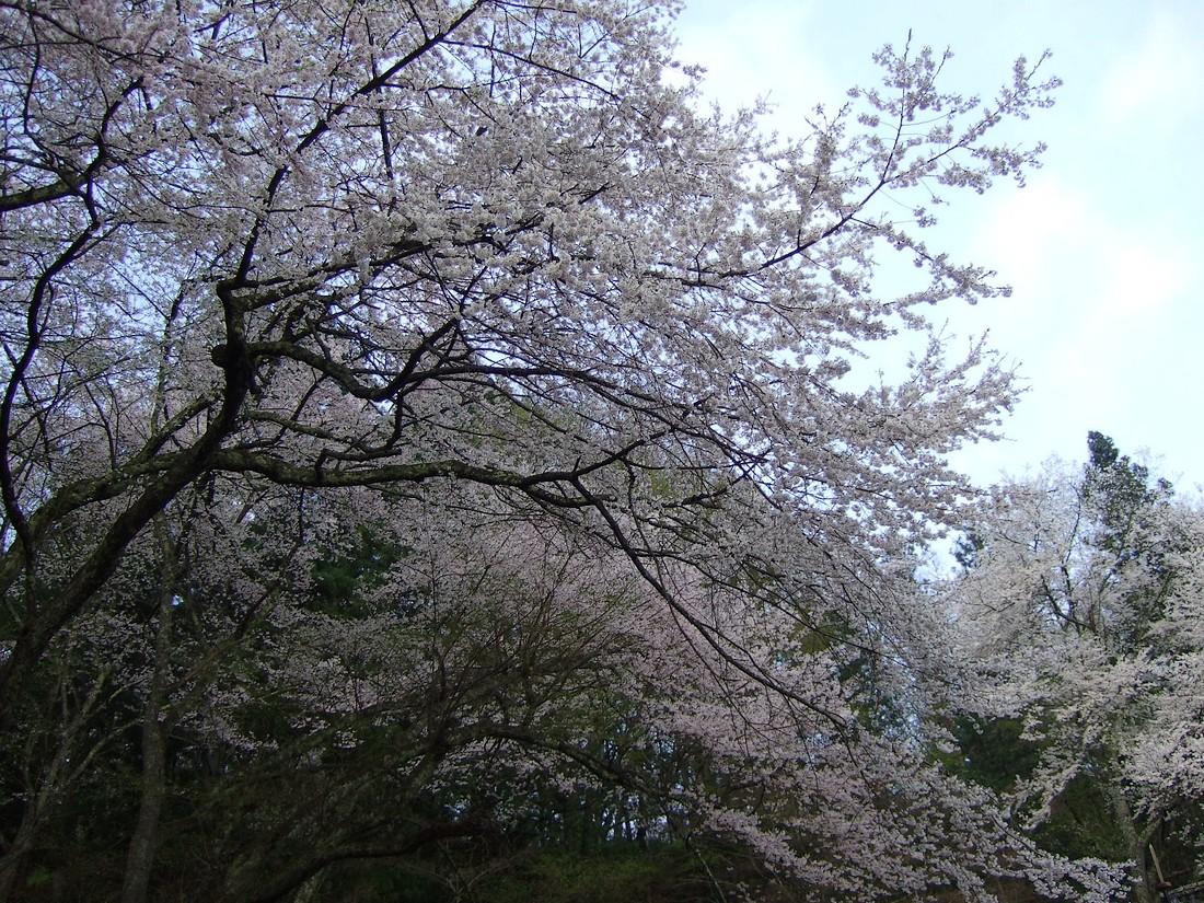 南部神社_d0001843_0271630.jpg