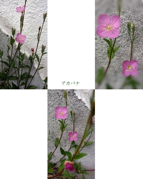 d0075453_912976.jpg