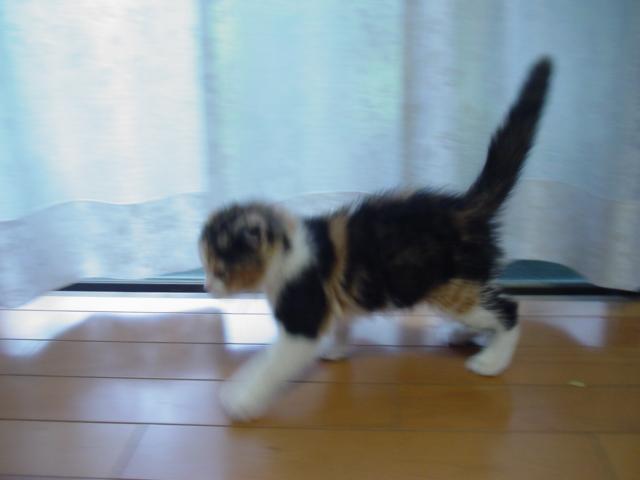 綿ぼこり猫_d0143957_1136201.jpg