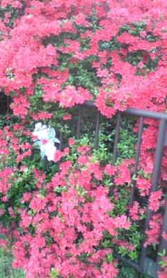 小金井から桜上水、くもり空のライブ♪_c0131063_19442734.jpg