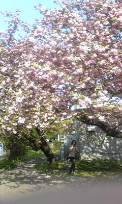 小金井から桜上水、くもり空のライブ♪_c0131063_19442737.jpg