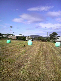 牧草刈り_e0063268_20152743.jpg