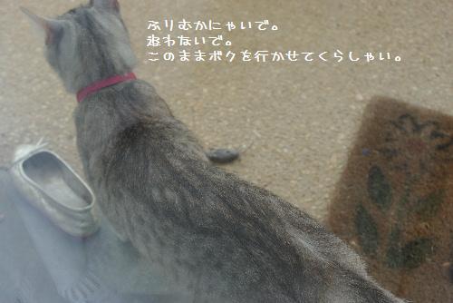 b0051172_2213762.jpg