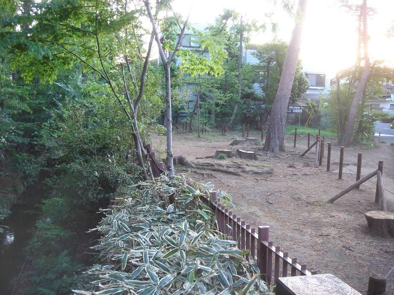 野火止用水沿いの樹林伐採_f0059673_23534935.jpg