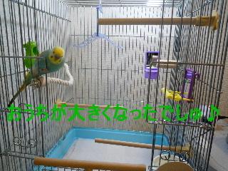 b0062090_3232329.jpg