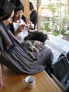 ついにオープン!DAZAIFU CAFE PROJECT!!その2_f0048597_7404765.jpg