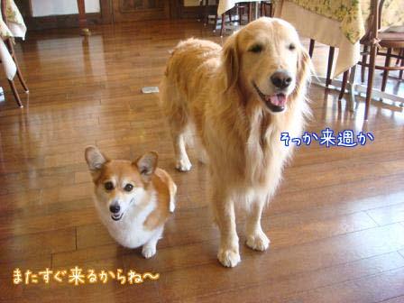 本土狐に遭遇_f0064906_20112128.jpg