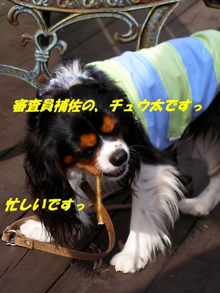 b0067012_472437.jpg